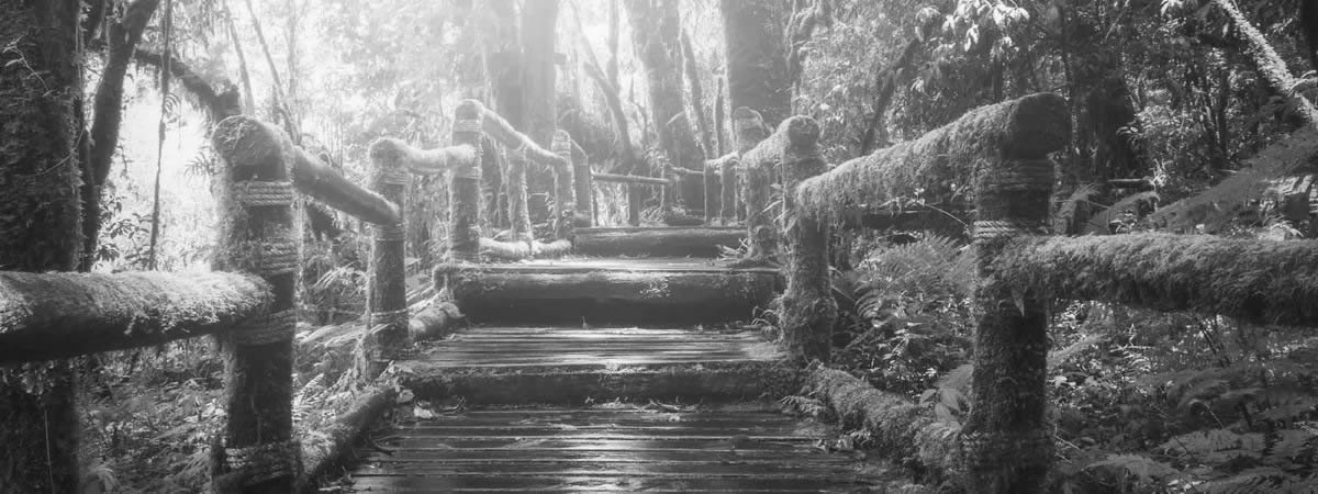 Suspension bridge, wooden steps or tree trunks in the forest - immersed in sun rays.